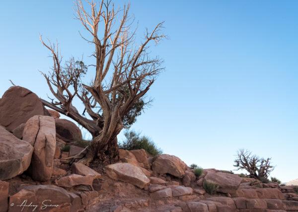 Gran Cañon, Arizona